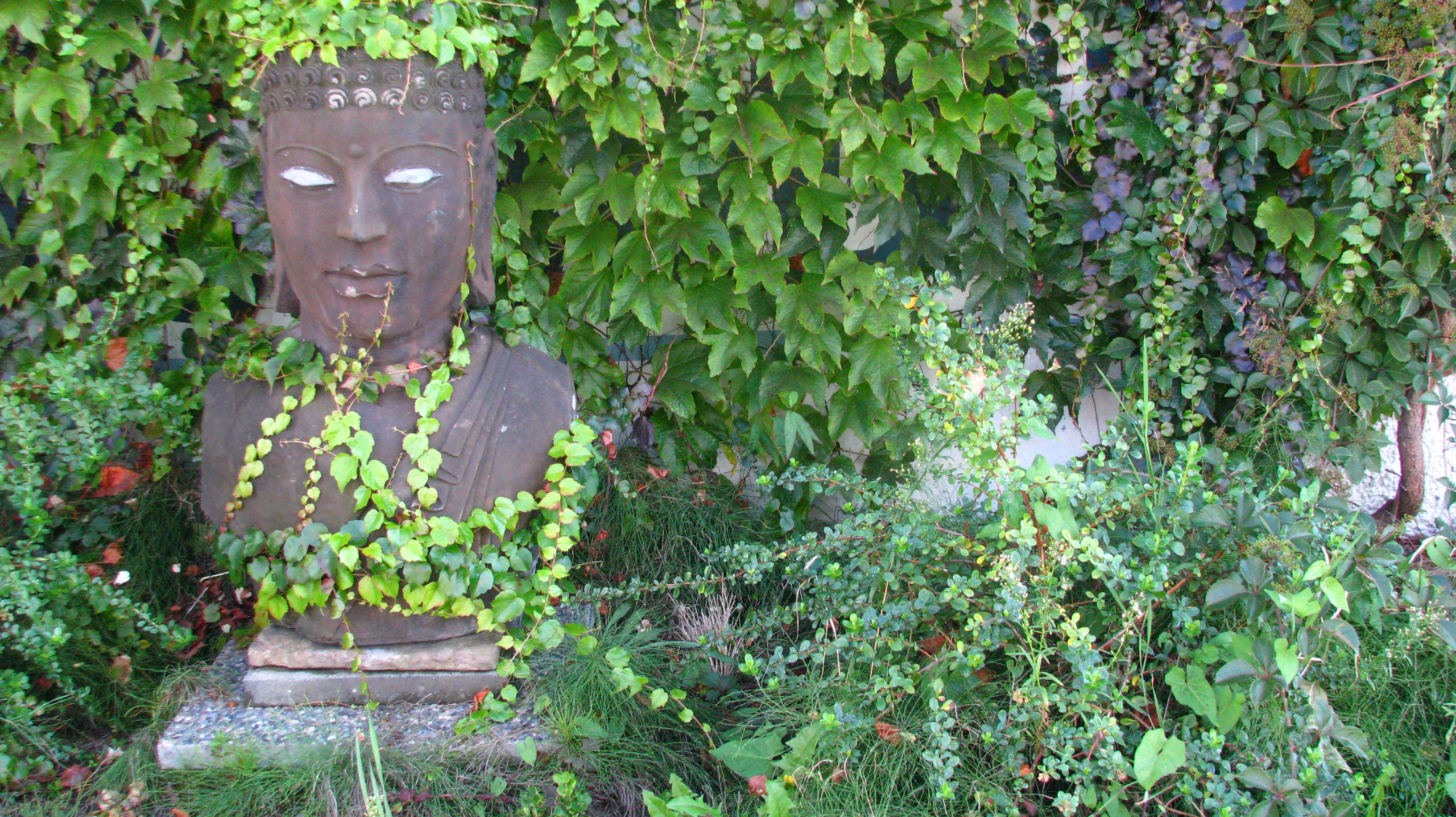 buddha in the bush
